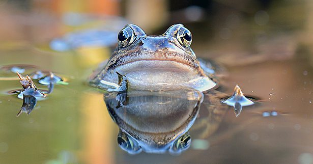 Don't be a boiling frog - Become personally accountable for your own career.
